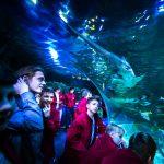 Metropolitní a akvárium podle T.K.